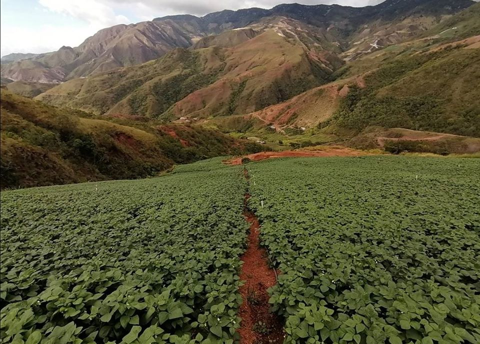 Foto: Cortesía. San Calixto ha tenido periodos de enfrentamientos entre el Eln, Epl y Farc por el control de producción de coca en la zona.
