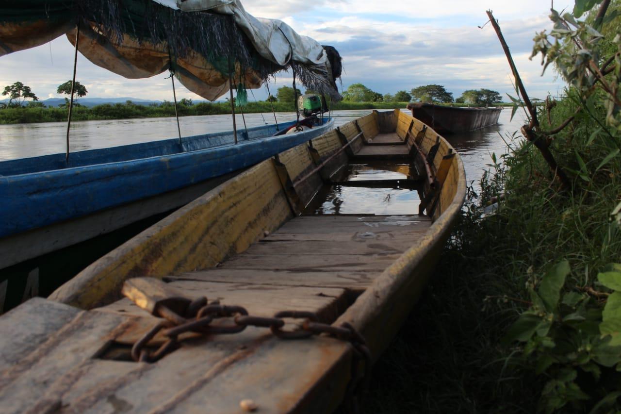 Foto: Canoas a orillas de la Cienaga La Pajarera