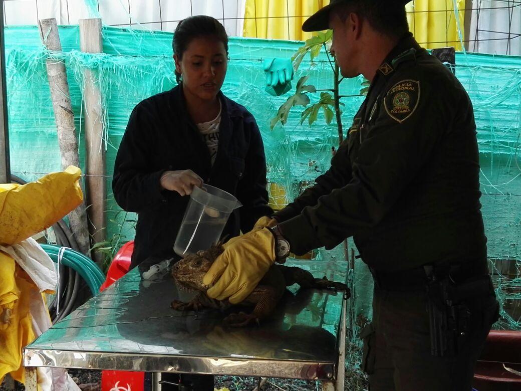 Los encargados de tratar a las especies que se vieron afectadas por el derrame de crudo en La Lizama, fueron Cabildo Verde y la Policía Ambiental. Foto: Policía Ambiental Santander.