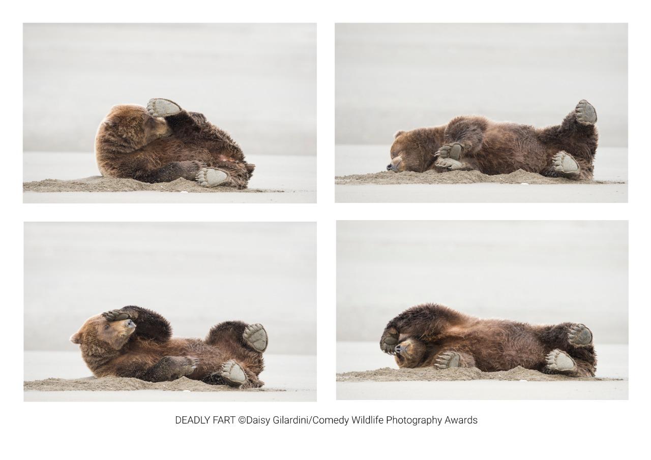 © Daisy Gilardini / Comedy Wildlife Photography Awards 2020.