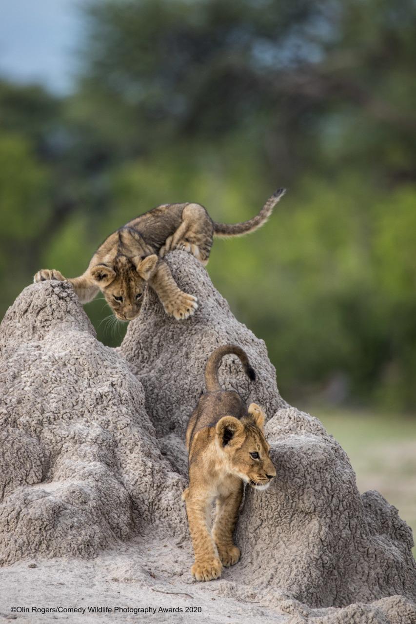 © Olin Rogers/ Comedy Wildlife Photography Awards 2020.