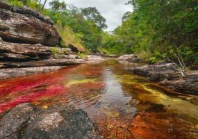 Caño Cristales, uno de los grandes potenciales turísticos del Meta. Foto: Mario Carvajal.