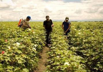 Foto: MinAgricultura