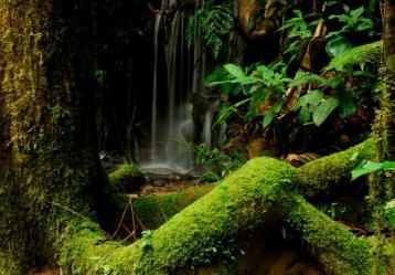 Foto: Archivo de Parques Nacionales. Ingrid Paola Jurado Rivera.