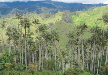 Foto: Parques Nacionales Naturales.