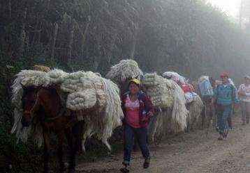 Fique camino al mercado en Mogotes. Foto: Manuel Atuesta.