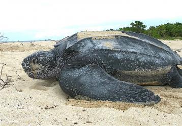 Foto: U.S. Fish and Wildlife Service Southeast Region