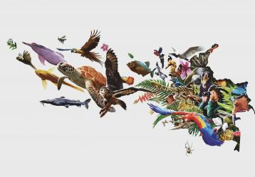 Ilustraciones:  Contemplar, comprender, conservar: Manual ilustrado para guías de turismo de naturaleza en Colombia / Jhon Jairo Álvarez Valbuena, Steven Pinzón Rodríguez, María Jimena Tafur Cuartas, Diego Bohórquez Novoa