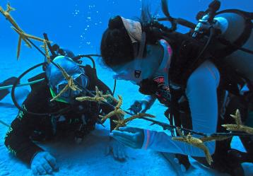 Foto: Corales de Paz