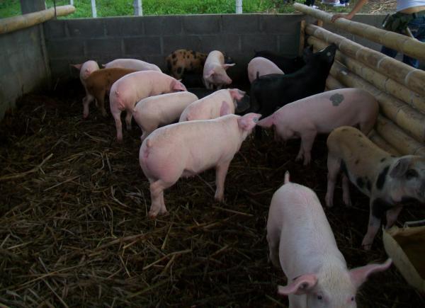 Foto: joligaseblog.blogspot.com