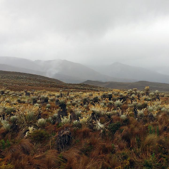 Paisajes andinos, en el Sumapaz, el Páramo más grande del mundo.