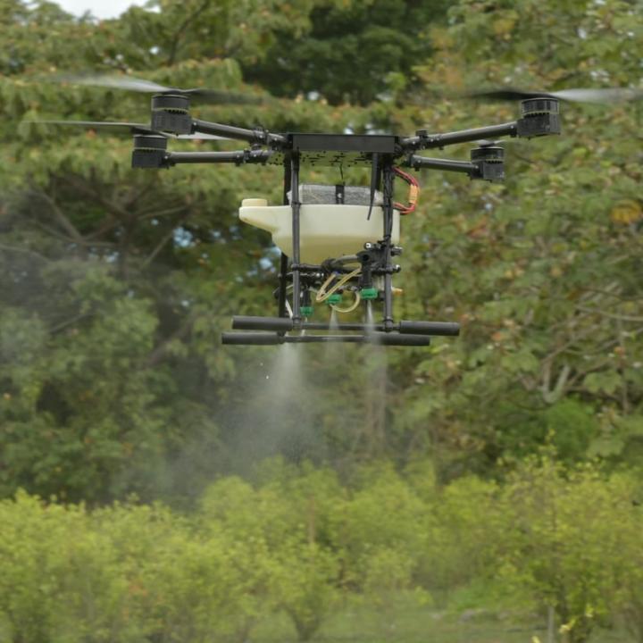 Con drones se erradicarían a diciembre de este año alrededor de 1.728 hectáreas. Foto: Carolina Bustamante.