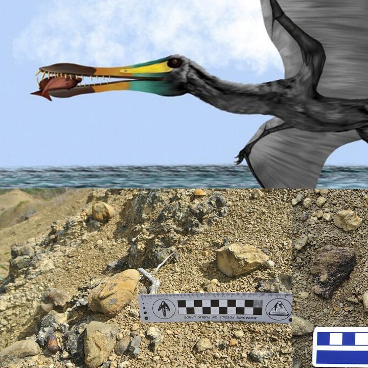 Reconstrucción basada en los diferentes restos fósiles encontrados. Crédito ilustración: Paola Machuca