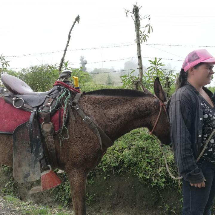 La directora de la Junta de Acción Comunal de la vereda Madroñales en Caldas se desplaza en una mula que bautizó 'Niña', que hierra cada mes y medio por ser su único medio de transporte. Foto: Vanessa Sánchez.