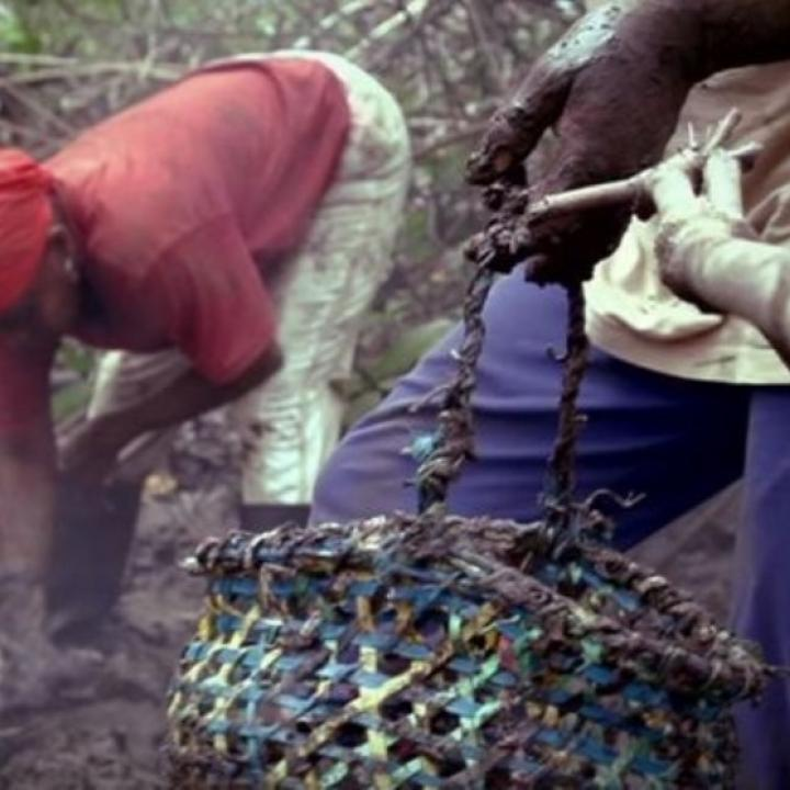 Imágen del documental 'Conchar y sobrevivir' de Señal Colombia.