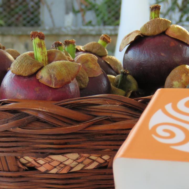 El Mangostino es la fruta representativa del municipio de Mariquita en el departamento del Tolima. Foto: Andrés Cristancho - Radio Nacional de Colombia