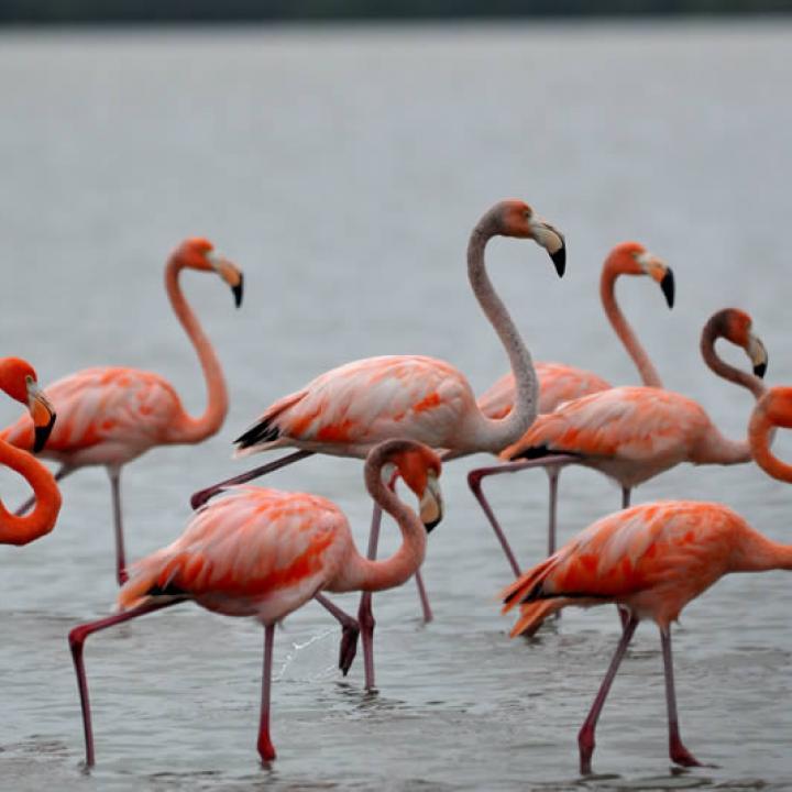 Картинки по запросу flamingos in colombia